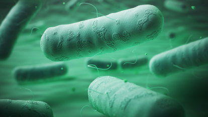 Researchers undermine bacterial defences in fight against superbugs