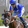 Amazing: Winx has made it 30 wins in  row.