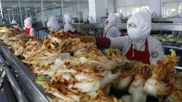 Workers of the Ryugyong Kimchi factory make fresh kimchi, in Pyongyang, North Korea.
