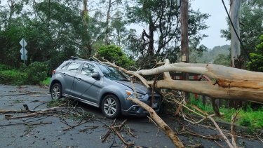 A fallen tree on top of a car after storms in Belgrave on Thursday night.