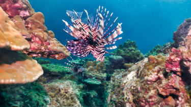 The Great Barrier Reef supports more than 60,000 jobs and contributes about $6 billion to the economy.