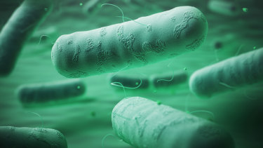 Gram negative bacteria have a double membrane layer of defences, which makes them very resistant to antibiotics.