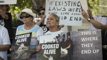 Protesters hold placards denouncing live exports of sheep.