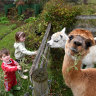 Where are we going today, Mum? Not far, darlings. Alpaca some sandwiches