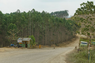 This acacia forest belongs to a papermill owned by presidential candidate Prabowo Subianto's brother. It is one of the possible sites of the new capital.