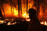 The Victorian town of Mallacoota is one of many affected by recent bushfires.