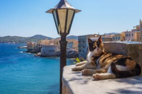 Nearly 40,000 apply for cat job on Greek island