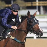 Personal wins a barrier trial at Randwick on Thursday