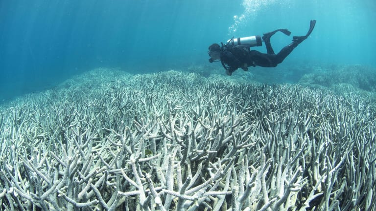 A diver inspects coral bleaching at the Great Barrier Reef, Heron Island.