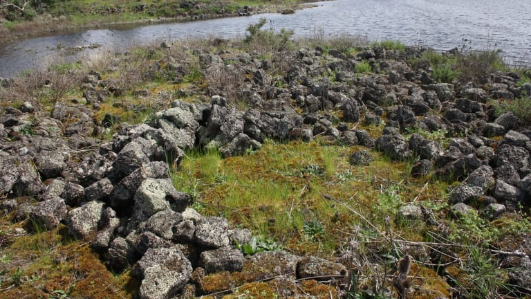 Remains of an ancient Indigenous stone house at Lake Condah, part of the Budj Bim landscape.