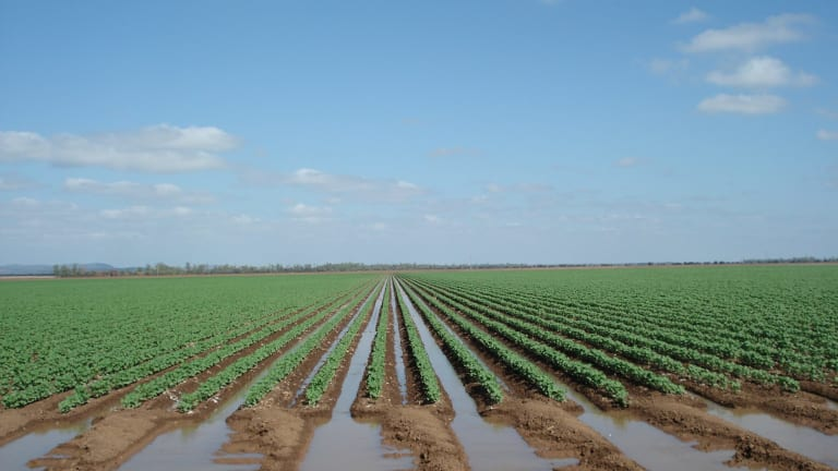Irrigation in Australia has come under greater scrutiny after a series of revelations about high-cost water buybacks.