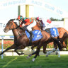 Race-by-race tips and preview for Taree on Monday