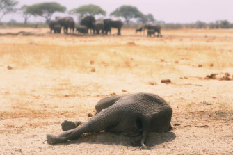 A dead elephant lays in the Hwange National Park in Zimbabwe.