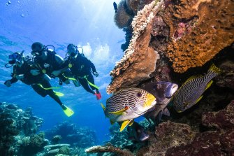 Tourist centres such as Cairns, a jumping off point for the Great Barrier Reef, have suffered heavily due to the coronavirus pandemic. A special assistance package is due to be released within days.