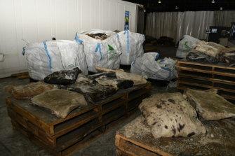 The drugs were found in 'putrid' animal skins.