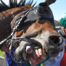Race-by-race tips and preview for Newcastle on Thursday