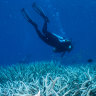 The decline of the Reef, documented by Australian scientists, is undeniable.
