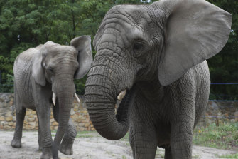 Witnesses said an elephant was preparing to charge at the intruder before he escaped with his two-year-old daughter.