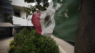 Marijuana plants wave in the wind along with a Mexican flag at a camp outside of the country's Senate building in Mexico City where the vote took place.
