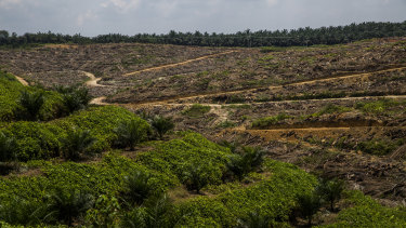 The palm oil trade has devastated many parts of Indonesia.