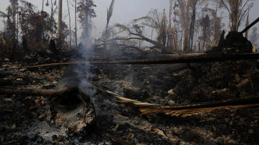 Trees are destroyed after a fire in the Vila Nova Samuel region, along the road to the Jacunda National Forest, Rondonia state, part of Brazil's Amazon.