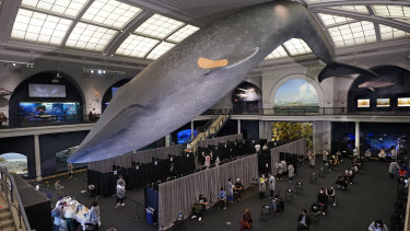 The American Museum of Natural History has turned into a mass vaccination site.