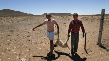 Children carry a dead lamb belonging to small scale farmer Gertruida Buffel in Vosburg, South Africa.