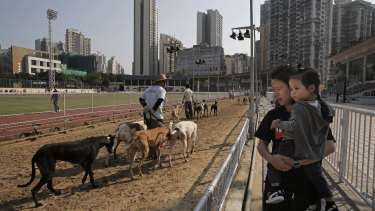 Visitors look on as the greyhounds are exercised on the closed racetrack.