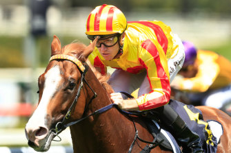 Quackerjack is a Randwick specialist in the Doncaster.