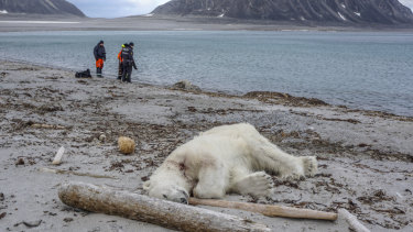 The polar bear was shot dead on the Svalbard archipelago between Norway and the North Pole.
