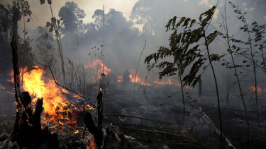 A fire burns trees and brush along the road to Jacunda National Forest in Brazil.