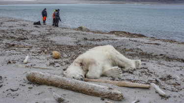 Authorities search the coastline on Saturday, July 28,  after a polar bear attacked and injured a polar bear guard who was leading tourists off a cruise ship on the Svalbard archipelago between Norway and the North Pole.