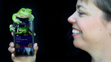 The (frog-approved) FrogID app on a smart phone.