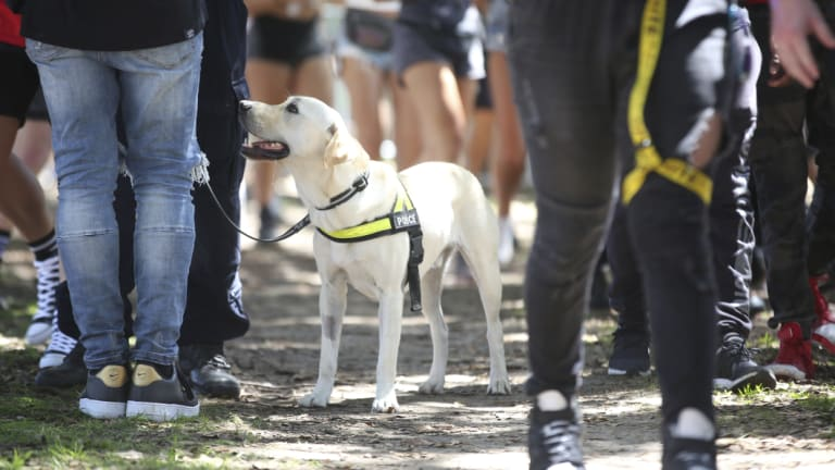 Police undertake searches with the help of sniffer dogs at the Field Day music festival in Sydney on New Years Day.