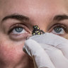 The fungus, the pregnancy test and the battle to save Canberra's frogs