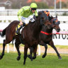 Stayer's Mornington Cup win makes good Sense
