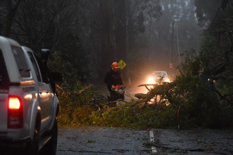 SES and CFA volunteers cleared trees throughout the night from the winding roads of the Dandenong Ranges.
