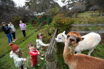Alpacas Anzac and Sydney are a big attraction for families at Braeside Mount Macedon Country Retreat.