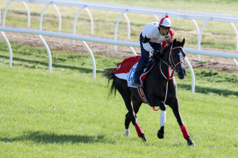 Japanese horse Lys Gracieux is being prepared for the Cox Plate.