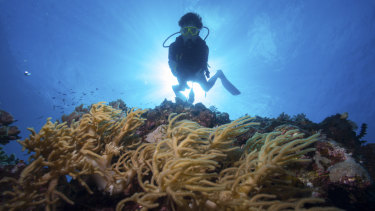 A diver on the outer Great Barrier Reef near Port Douglas.