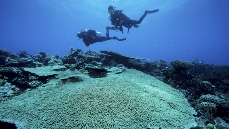 Divers on the outer Great Barrier Reef near Port Douglas.