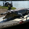 $5000 bounty on croc killer after giant 5.2-metre reptile shot in central Qld