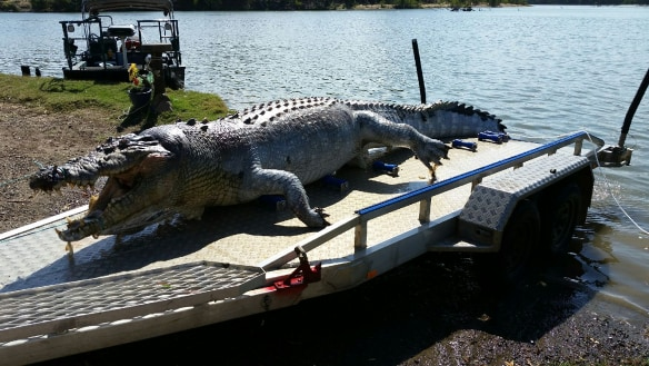 $5K bounty on croc killer after giant reptile shot in central Qld