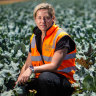 'Passing the buck': Canberra puts heat on Andrews as farms plead for workers