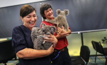 Environment Minister Leeanne Enoch meets two of the koalas being cared for at the RSPCA's hospital in Wacol, Brisbane.
