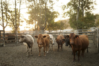 Australian beef exports to China reached new highs in October, topping 30,000 tonnes for the month.