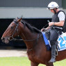 Cup scratching labelled a 'media stunt' as Marmelo's owners eye legal action