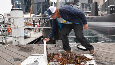 Seabin Project's Pete Ceglinski demonstrates how much waste a Seabin collected overnight near the Australian National Maritime Museum.
