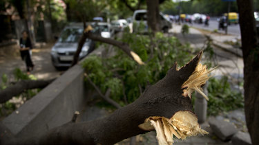 An uprooted tree blocking a pathway in New Delhi, India.
