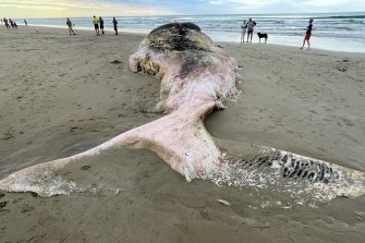 The dead whale washed up on Fairhaven beach in the early hours of Tuesday morning.